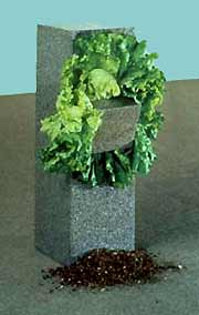 Anselmo arte povera sculpture with lettuce