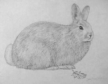 Joan Berg Victor rabbit drawing