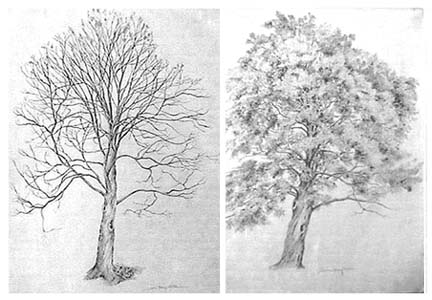Joan Berg Victor two drawings of one tree