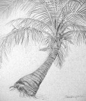 Joan Berg Victor palm tree drawing detail