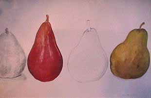Joan Berg Victor pears drawing