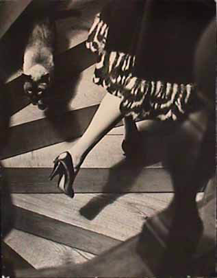 Frances Pellegrini fashion photograph Cats