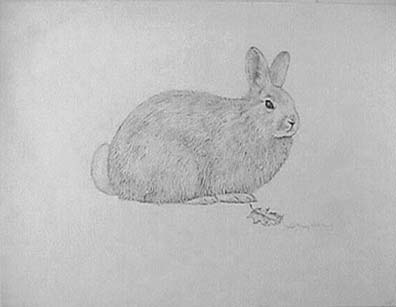 Joan Berg Victor drawing Homage to Durer:  Woodhare