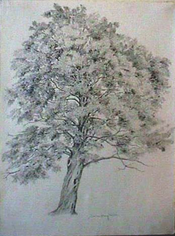 Joan Berg Victor drawing Maple in Full Leaf