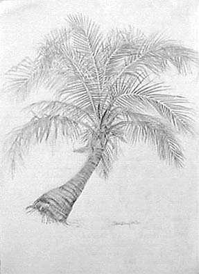 Joan Berg Victor drawing Palm Tree