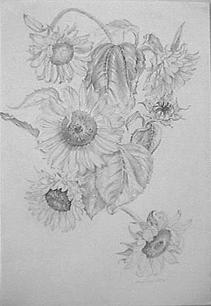 Joan Berg Victor floral drawing Sunflowers
