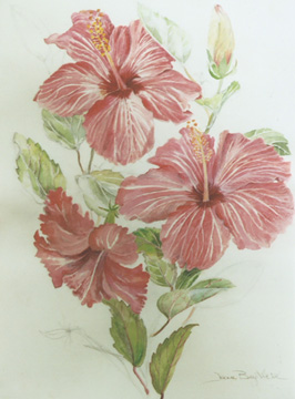 Joan Berg Victor flower drawing Ruffled Hibiscus