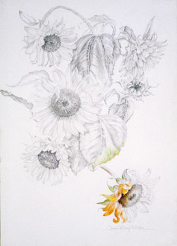 Joan Berg Victor flower drawing Sunflowers